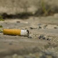 Jót tesz-e a növényeknek a cigaretta hamuja?