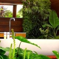 Öt ideális fürdőszobai növény