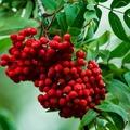 Hat csodás, egzotikus gyümölcs minden kertbe!