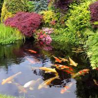 Kerti tavak nyári gondozása