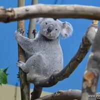 10 érdekes tény az eukaliptuszról