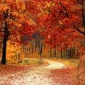 Mitől és miért hullanak a levelek ősszel?
