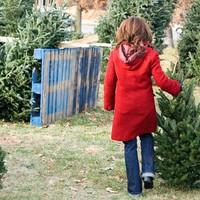 Így válasszunk karácsonyfát!