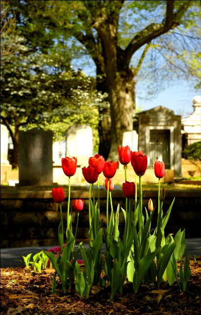 landscape-tulip-2004.jpg