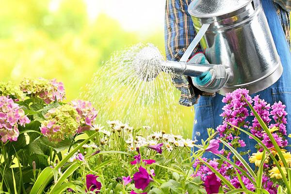 watering.jpg
