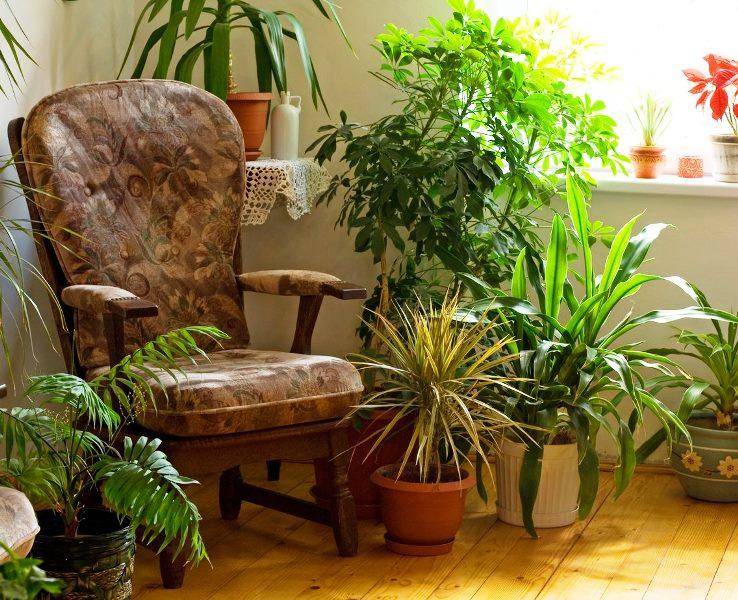 living-room-plants.jpg