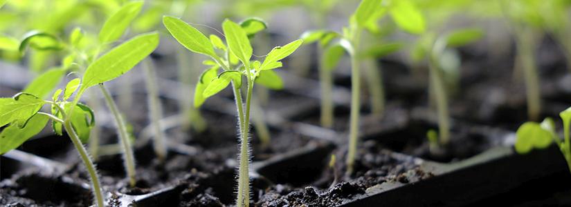 10_steps_to_seedling_success_0.jpg