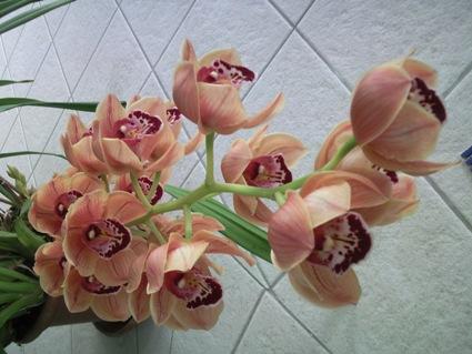 csonak_orchidea_547964_29789.jpg