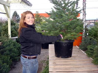 living-christmas-tree-2.jpg
