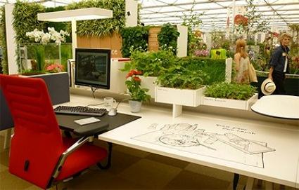 Indoor-Plants-in-the-Office-2012.jpg
