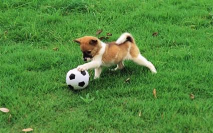 Pretty-Dogs-in-Garden-dogs-13905929-1920-1200.jpg