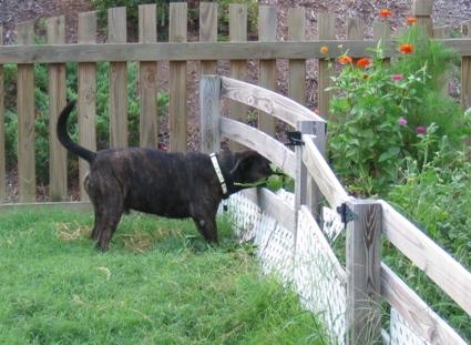 dog in garden.jpg