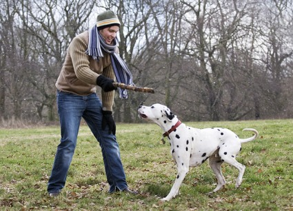 dog-retrieving.jpg