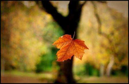 falling-leaf.jpg