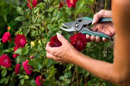 plantarosegarden_05_1.jpg