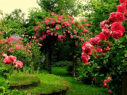 rose-flower-garden3.jpg