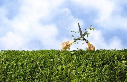 hedge-trimming_1402365i.jpg