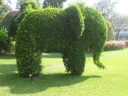 unique_hedge.jpg