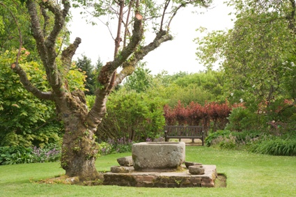 Crathes_Castle_garden_tree.jpg