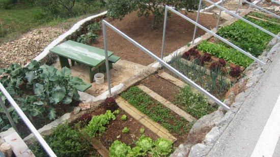 bio-garden.jpg