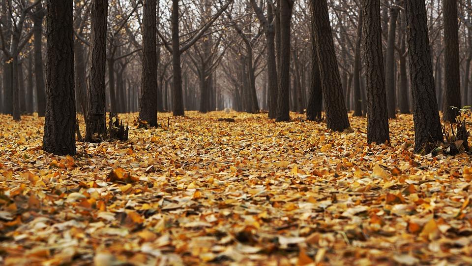 autumn-1869426_960_720.jpg