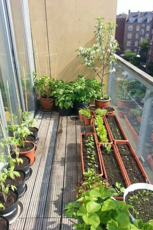 234-benefits-of-having-vegetable-garden-for-apartment-balcony-2.jpg
