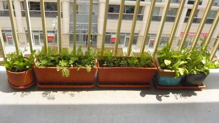 Ennél nincs is egyszerűbb, csak pár hosszúkás virágláda, amiket kirakunk az erkélyre. Kerülhetnek beléjük színes virágok, egynyáriak, zöldségek, vadvirágok, vagy épp fűszernövények.