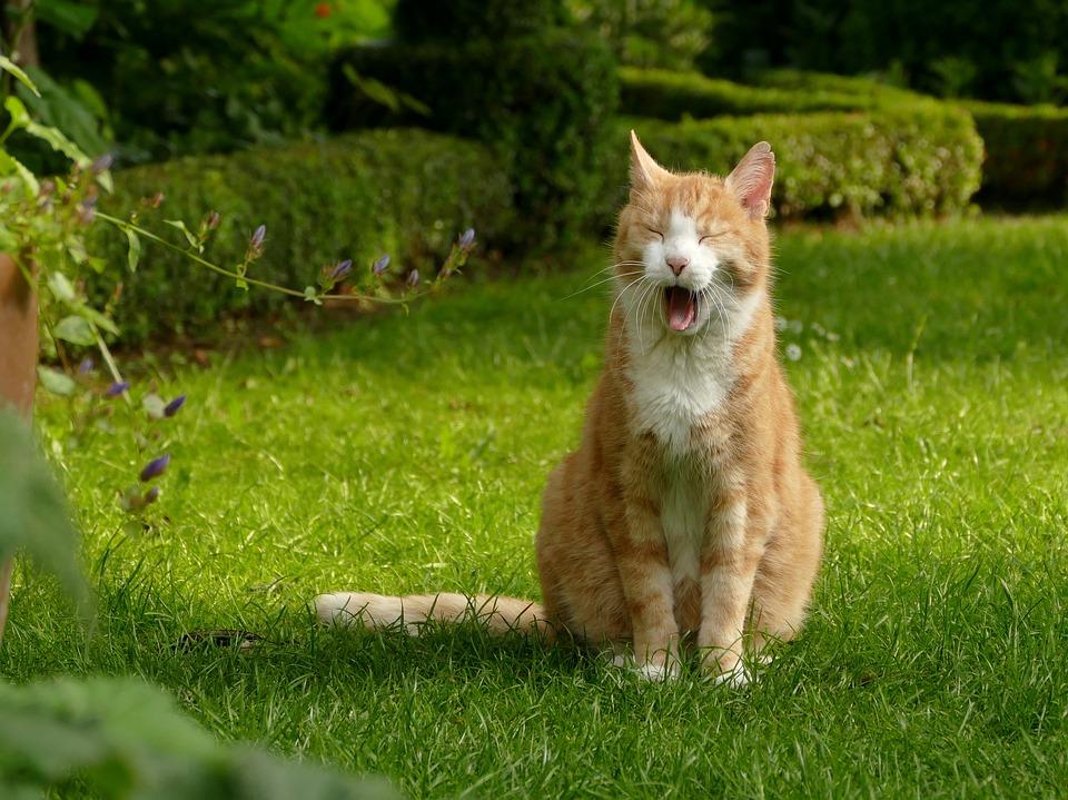cat-2438717_960_720.jpg
