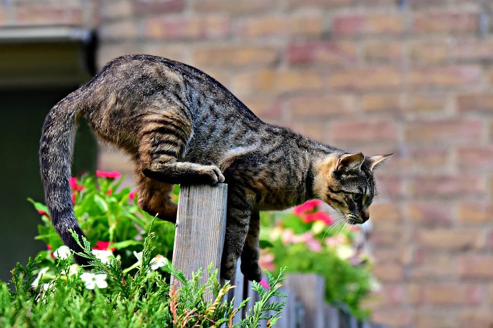 cat-3652662_960_720.jpg