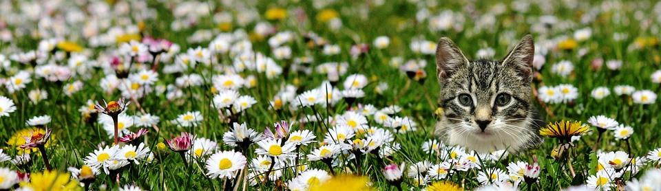 meadow-5296646_960_720.jpg