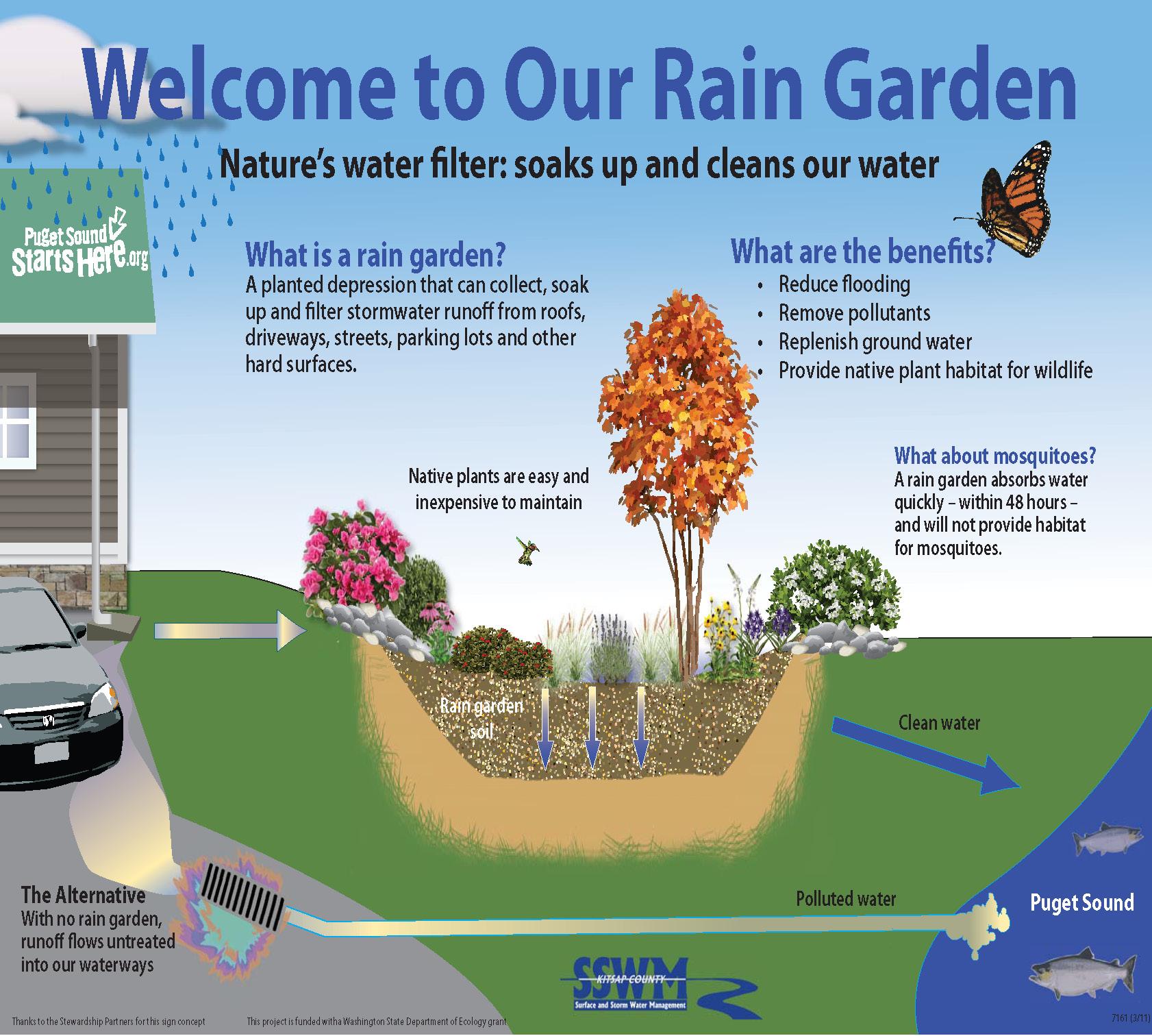 raingarden_yard.jpg