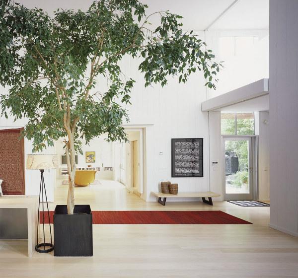 biophilic-design-indoor-tree.jpg