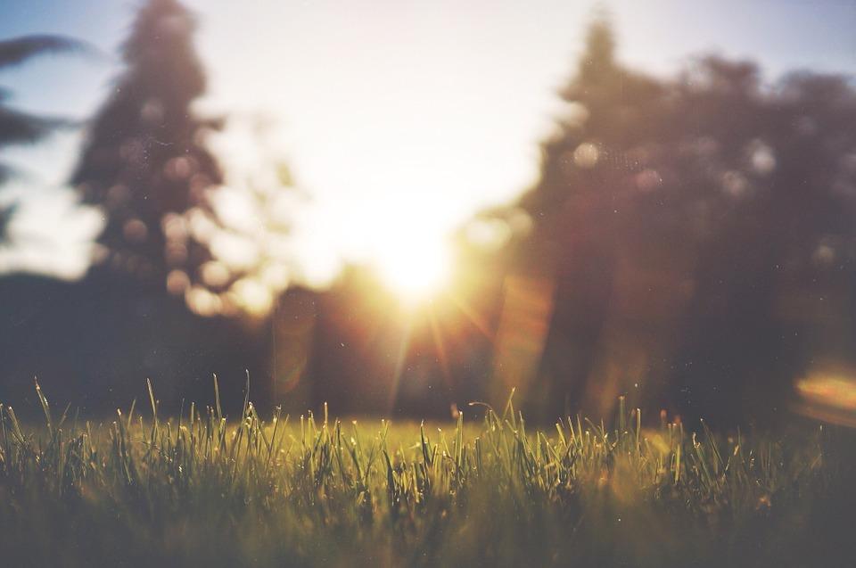 grass-455753_960_720.jpg