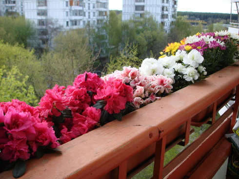 flowers-during-vacation.jpg