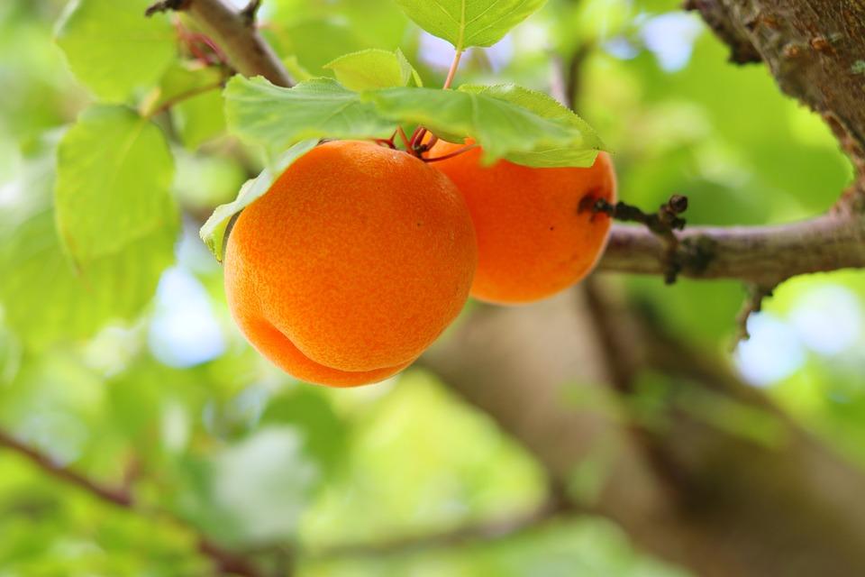 fruit-3986434_960_720.jpg