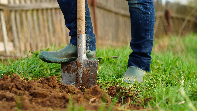 digging.jpeg