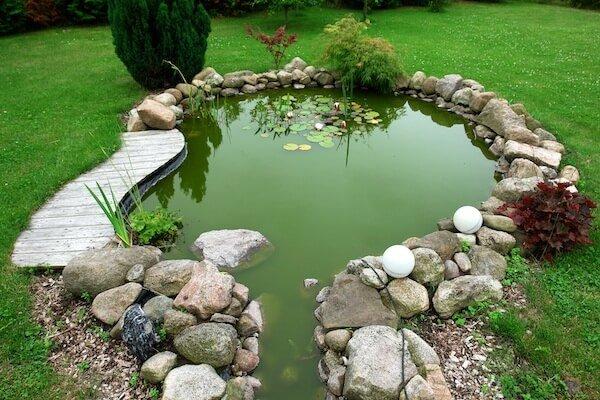 goldfish-pond-care.jpg