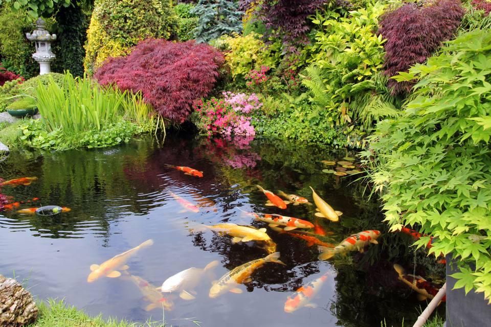 japanese-style-garden-pond-157913682-56a4a0ca3df78cf7728351b0.jpg