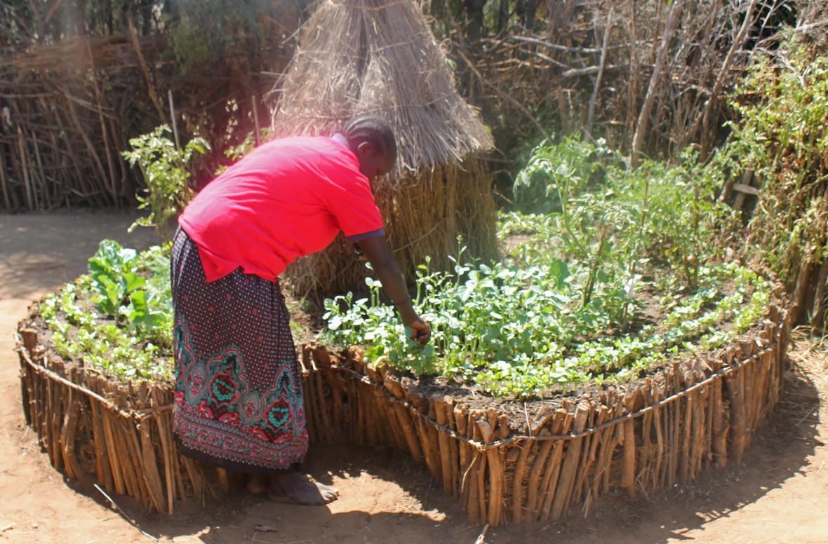concern-uganda-keyhole-gardens-2-1180x776.jpg
