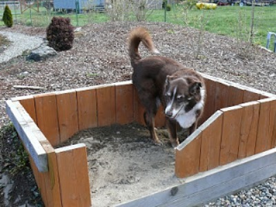 dog_area_in_garden.jpg
