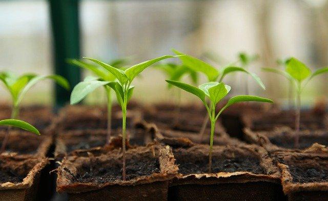 seedling-5009286_640.jpg