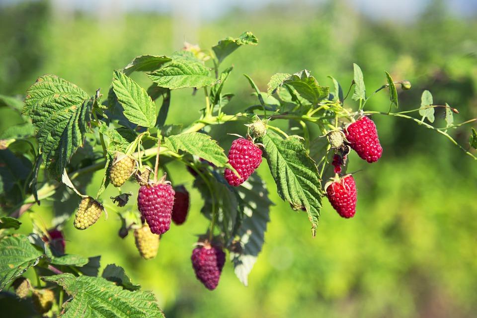 fruit-3313970_960_720.jpg