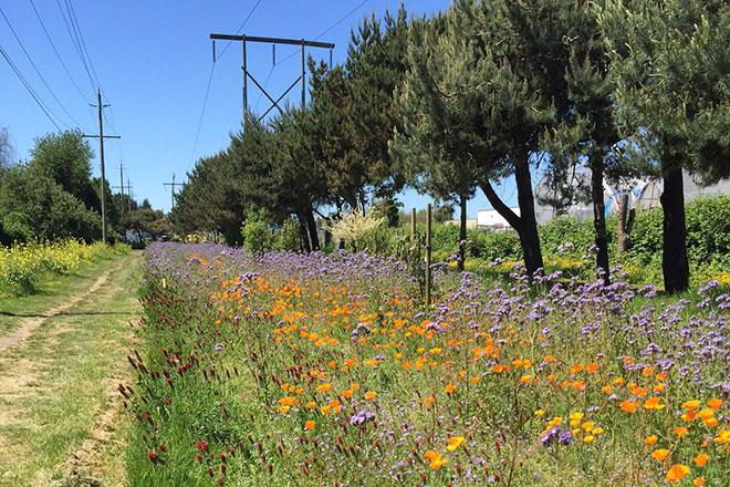 pollination-corridor-richmond-full-width-place.jpg