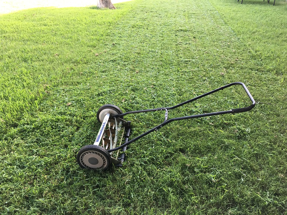 lawn-1812944_960_720.jpg