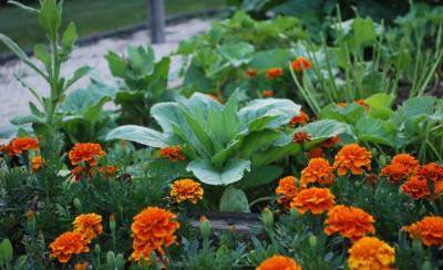 vegetable-garden-athomefcdotcom-400x244.jpg