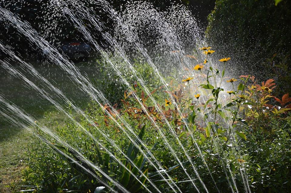 garden-3664278_960_720.jpg