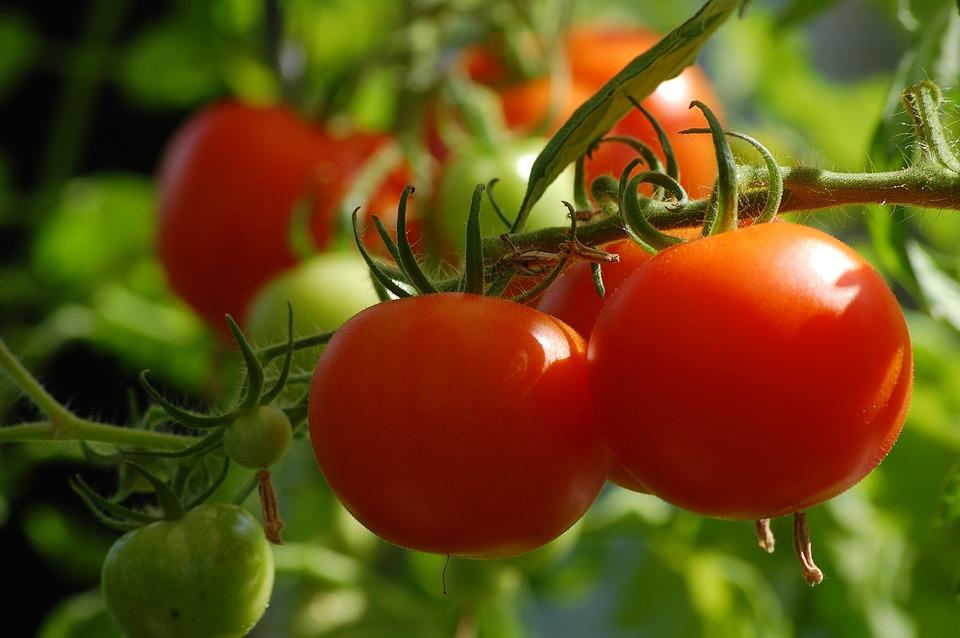 tomato-2643774_960_720.jpg