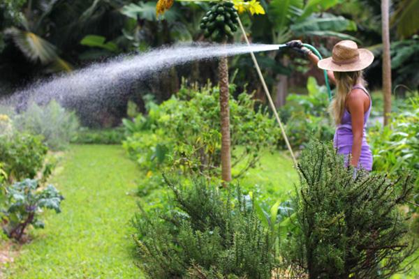 garden-watering.jpg