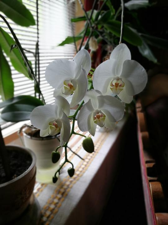 orchid-2429668_960_720.jpg