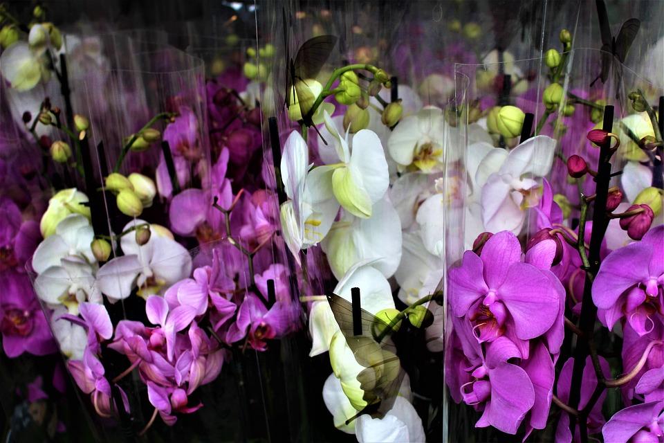 orchid-2929855_960_720.jpg
